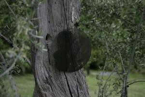 In the Vineyard of Joseph Beuys